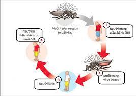 Những yếu tố gây ra sốt xuất huyết
